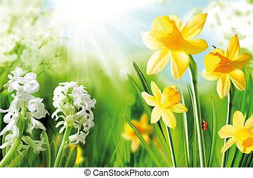 radosny, wiosna, bulwy