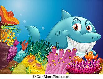 rafy, cielna, rekin, koral