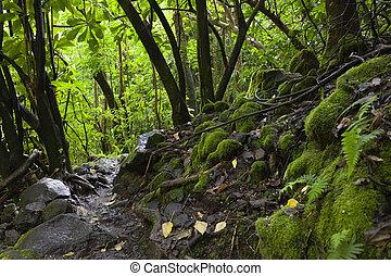 rainforest, maui, hawajczyk, hawaje