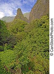 rainforest, maui, hawaje