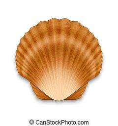 realistyczny, seashell, zamknięty, 3d, wektor, prospekt, brązowy, closeup, biały, muszelka, odizolowany, template., ikona, perła, górny, tło., projektować