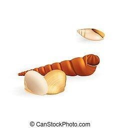 realistyczny, wektor, seashell