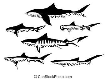 rekin, gatunek