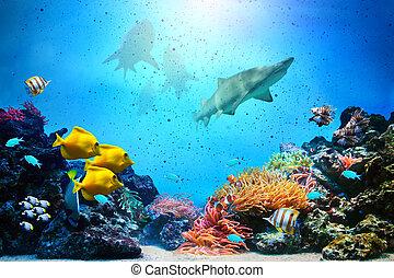 rekiny, podwodny, fish, koral, ocean polewają, rafa, grupy, jasny, scene.