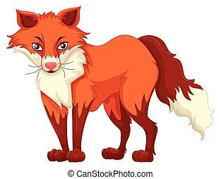 reputacja, biały lis, czerwone tło