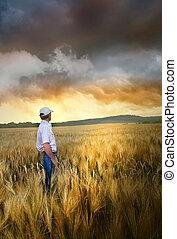reputacja, pole, pszenica, człowiek