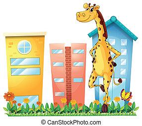 reputacja, przód, zabudowanie, żyrafa, wysoki