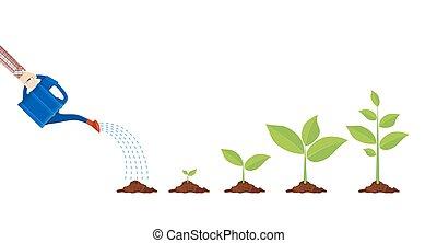 roślina, łzawienie, młody, może
