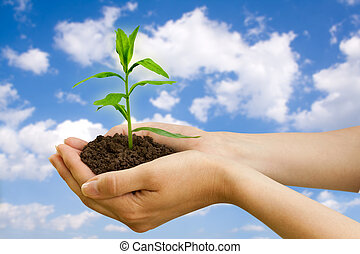 roślina, agriculture., ręka