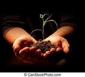 roślina, dzierżawa wręcza