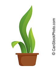 roślina garnczek
