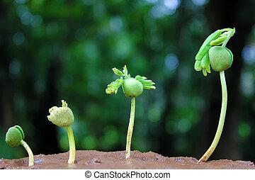 roślina, growth-baby, rośliny