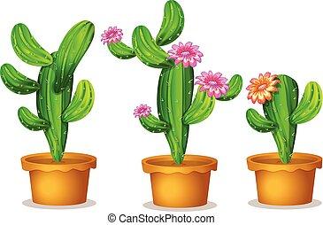 roślina, kaktus, garnek