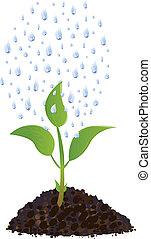 roślina, krople, zielony, młody, deszcz