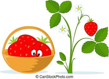 roślina, rysunek, truskawka, wektor, kosz, płaski, ilustracja
