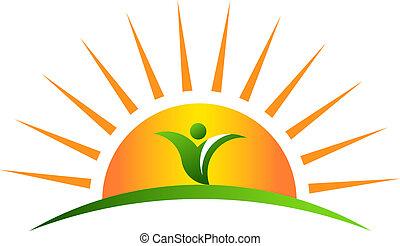 roślina, wschód słońca