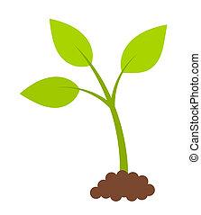 roślina, zielony, młody
