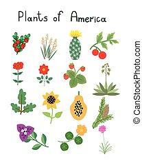 rośliny, ameryka