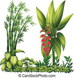 rośliny, dekoracyjny