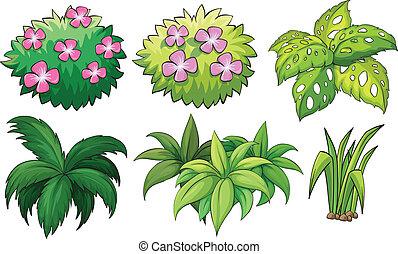 rośliny, dekoracyjny, sześć