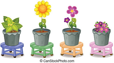 rośliny, doniczkowy, różny