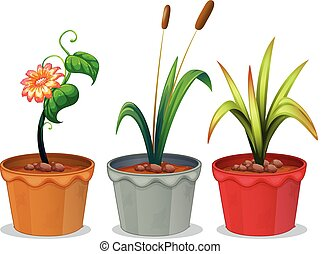 rośliny, doniczkowy