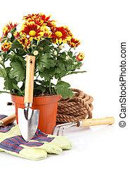 rośliny, equipments, kwiaty, ogród, róże