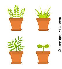 rośliny, garnek