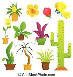 rośliny, garnki