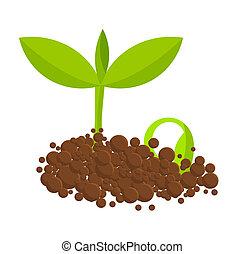 rośliny, germinal