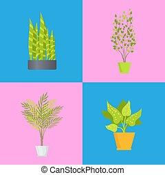 rośliny, komplet, ilustracja, ozdoba, wektor, wewnętrzny