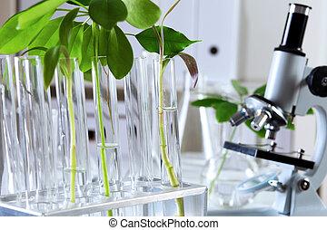 rośliny, laborotary, biologia, zielony