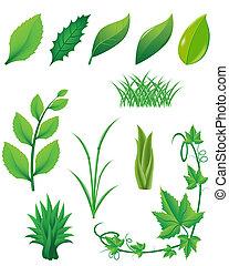 rośliny, liście, komplet, zielony, ikona