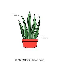 rośliny, płaski, doniczkowy, napełniać, sansevieria