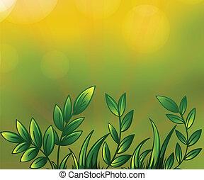 rośliny, pokryty obficie liśćmi