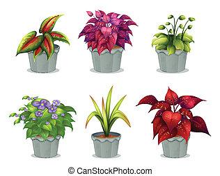 rośliny, różny, sześć