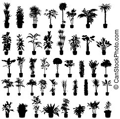 rośliny, sylwetka, zbiór