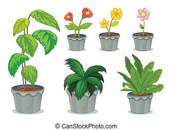 rośliny, sześć, garnki