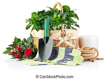 rośliny, wyposażenie, kwiaty, zielony, ogród