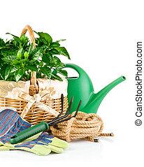 rośliny, wyposażenie, zielony, ogród