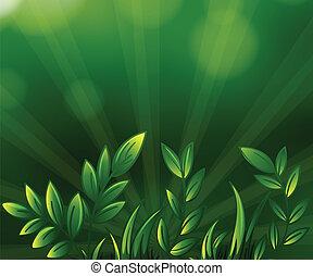rośliny, zieleń pokryta obficie liśćmi