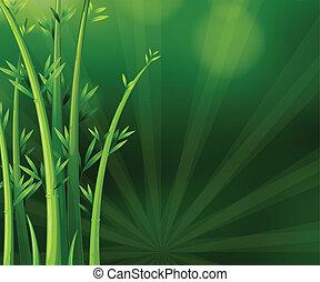 rośliny, zielony