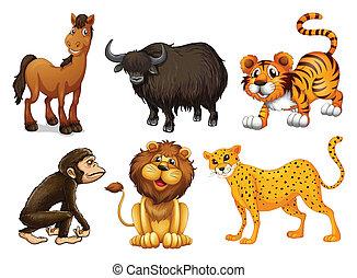 rodzaje, różny, zwierzęta, cztery-legged