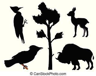 rodzaje, sójka, jeleń, dziewiczość, bawół, sylwetka, drewno, motives, las, dzięcioł, europejczyk, szczeniak, animals., różny, natura, komplet