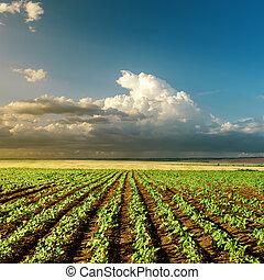 rolnictwo, zielony, zachód słońca pole