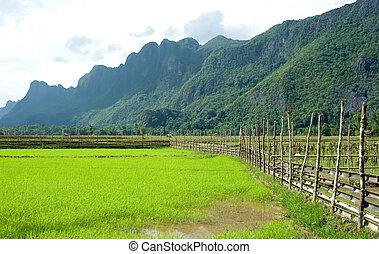 rozdrażnienie, okolica, tajlandia