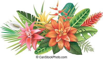 rozmieszczenie, tropikalne kwiecie