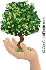 rozwój, drzewo, dzierżawa ręka