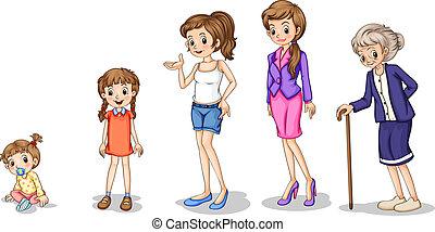 rozwój, fazy, samica