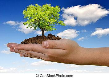 rozwój, ręka, drzewo